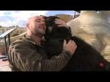 Планета собак. Монгольская овчарка - Банхар